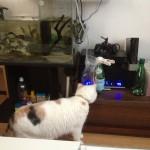 猫と水合わせの図2